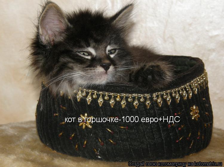 Котоматрица: кот в горшочке-1000 евро+НДС