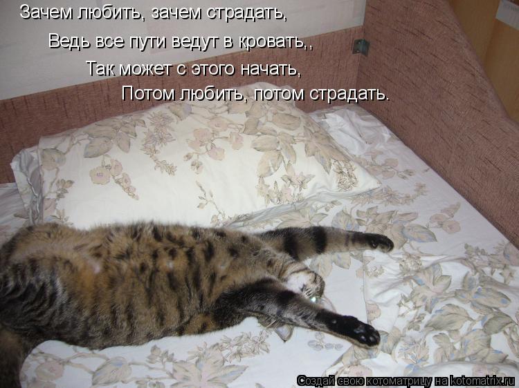 Котоматрица: Зачем любить, зачем страдать, Ведь все пути ведут в кровать,, Так может с этого начать, Потом любить, потом страдать…