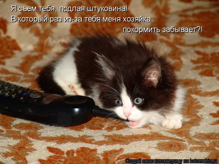 Котоматрица: Я съем тебя, подлая штуковина! В который раз из-за тебя меня хозяйка покормить забывает?!