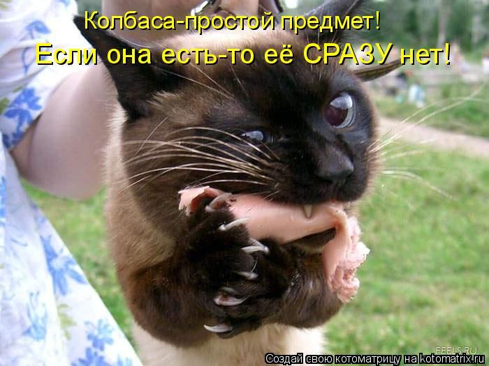 Котоматрица: Колбаса-простой предмет! Если она есть-то её СРАЗУ нет!