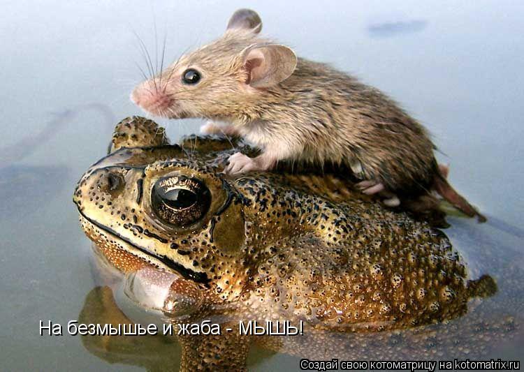 Котоматрица: На безмышье и жаба - МЫШЬ!