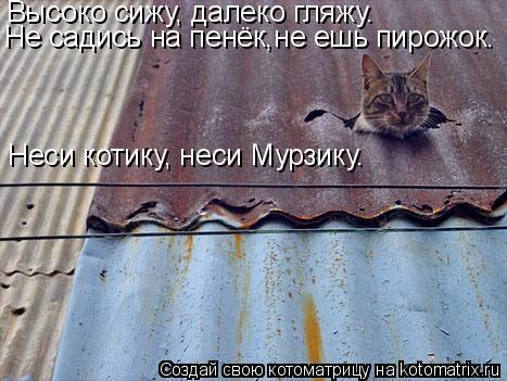 Котоматрица: Высоко сижу, далеко гляжу. Не садись на пенёк,не ешь пирожок. Неси котику, неси Мурзику.