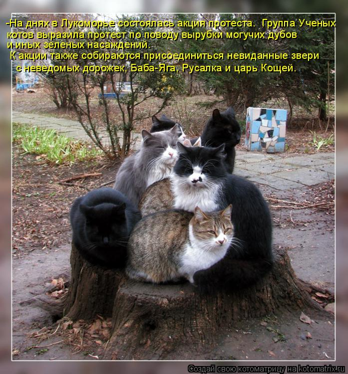 Котоматрица: -На днях в Лукоморье состоялась акция протеста.  Группа Ученых котов выразила протест по поводу вырубки могучих дубов  и иных зеленых насаж