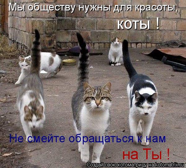 Котоматрица: Мы обществу нужны для красоты, коты ! Не смейте обращаться к нам  на Ты !