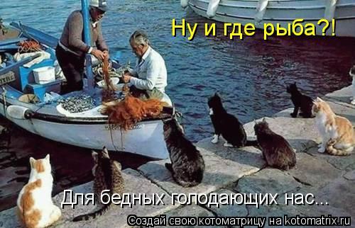 Котоматрица: Ну и где рыба?! Для бедных голодающих нас...