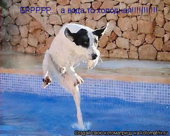 Котоматрица: БРРРРР.... а вода то холодная!!!!!!!!!!!