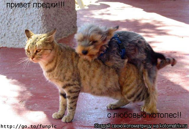 Котоматрица: привет предки!!!  с любовью котопес!!
