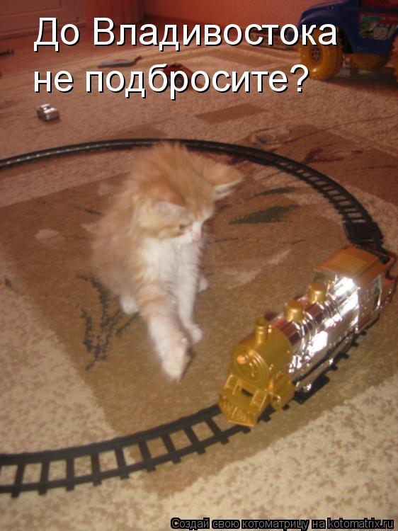 Котоматрица: До Владивостока не подбросите?