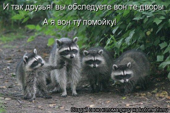 Котоматрица: И так друзья! вы обследуете вон те дворы А я вон ту помойку!