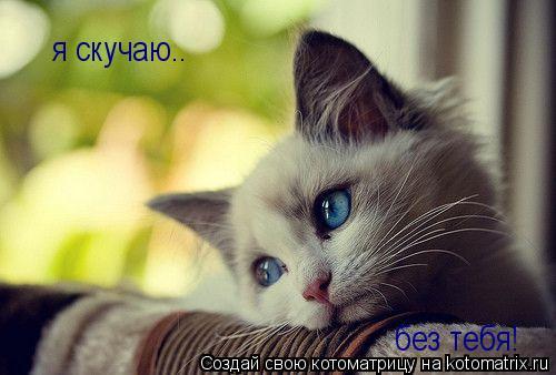 Котоматрица: я скучаю.. без тебя!