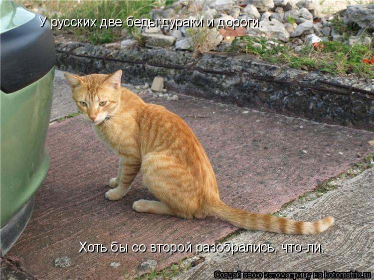 Котоматрица: У русских две беды:дураки и дороги.  Хоть бы со второй разобрались, что-ли.