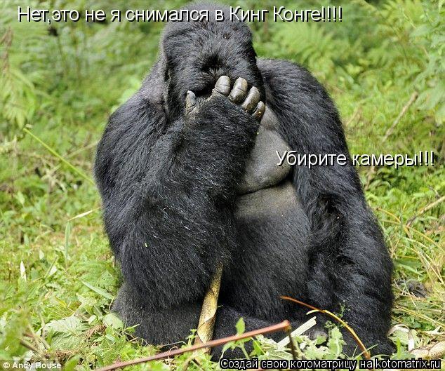 Котоматрица: Нет,это не я снимался в Кинг Конге!!!! Убирите камеры!!!