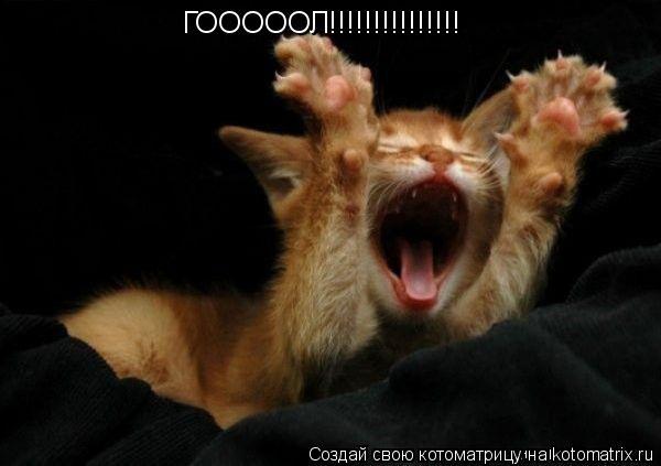 Котоматрица: ГОООООЛ!!!!!!!!!!!!!!!