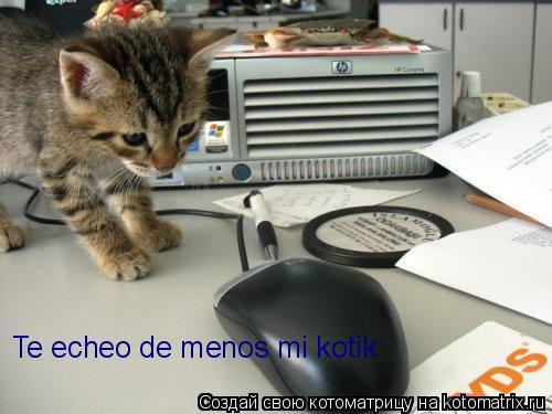 Котоматрица: Te echeo de menos mi kotik