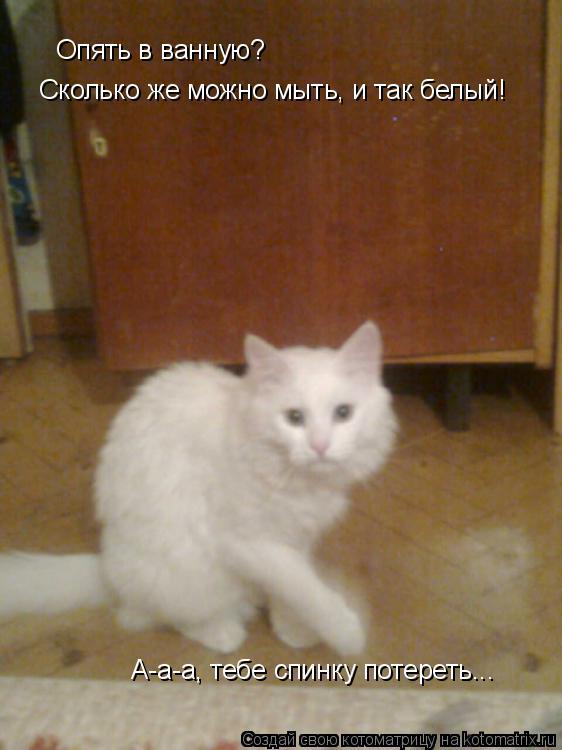Котоматрица: Опять в ванную?  Сколько же можно мыть, и так белый!  А-а-а, тебе спинку потереть...