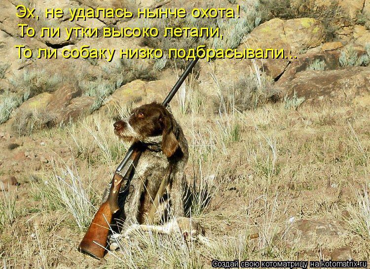 Котоматрица: Эх, не удалась нынче охота! То ли утки высоко летали, То ли собаку низко подбрасывали...