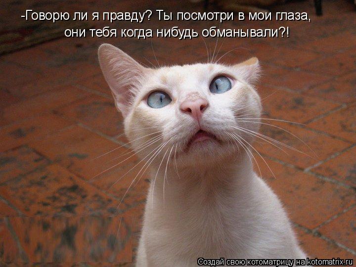 Котоматрица: -Говорю ли я правду? Ты посмотри в мои глаза, они тебя когда нибудь обманывали?!