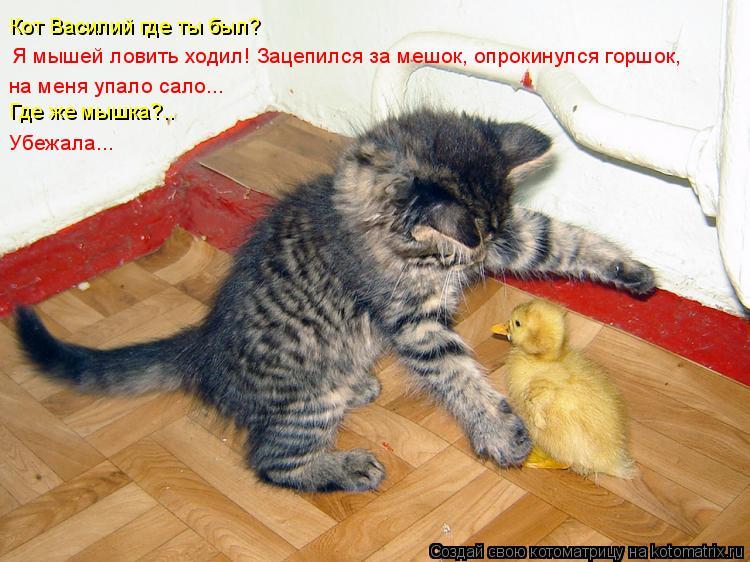 Котоматрица: Я мышей ловить ходил! Зацепился за мешок, опрокинулся горшок,  на меня упало сало...  Кот Василий где ты был? Где же мышка?.. Убежала...