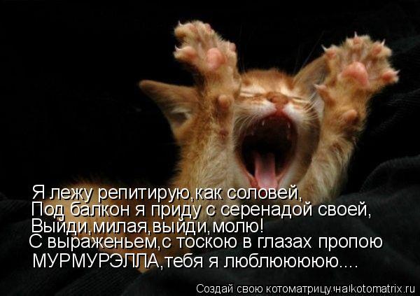 Котоматрица: Я лежу репитирую,как соловей, Под балкон я приду с серенадой своей, Выйди,милая,выйди,молю! С выраженьем,с тоскою в глазах пропою МУРМУРЭЛЛА,