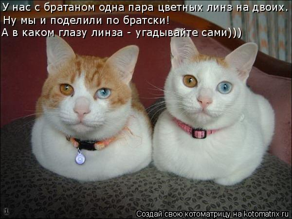 Котоматрица: У нас с братаном одна пара цветных линз на двоих.  Ну мы и поделили по братски! А в каком глазу линза - угадывайте сами)))
