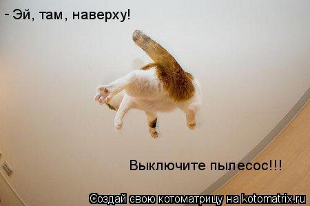 Котоматрица: Эй, там, наверху!  Выключите пылесос!!! -
