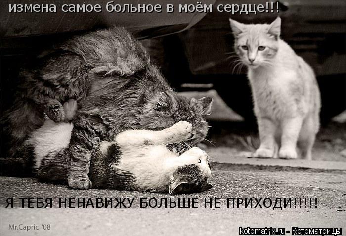 Котоматрица: измена самое больное в моём сердце!!! Я ТЕБЯ НЕНАВИЖУ БОЛЬШЕ НЕ ПРИХОДИ!!!!!