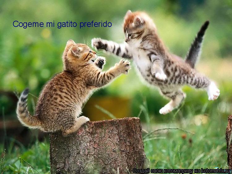 Котоматрица: Cogeme mi gatito preferido