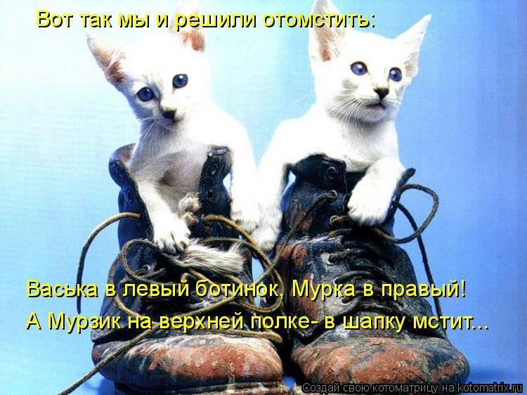 Котоматрица: Вот так мы и решили отомстить: Васька в левый ботинок, Мурка в правый! А Мурзик на верхней полке- в шапку мстит...