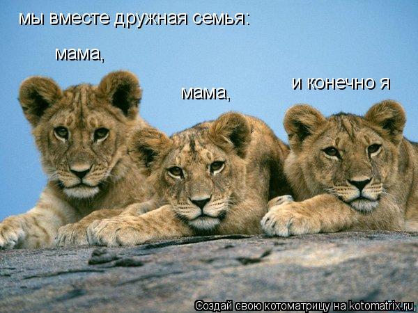 Котоматрица: мы вместе дружная семья: мама,                                    мама,                                    и конечно я