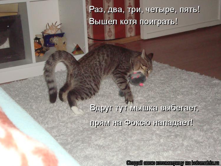 Котоматрица: Раз, два, три, четыре, пять! Вышел котя поиграть! Вдруг тут мышка выбегает, прям на Фоксю нападает!