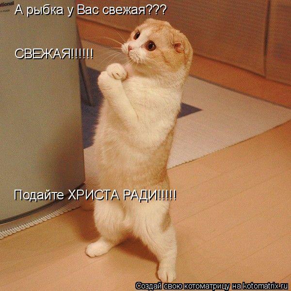 Котоматрица: А рыбка у Вас свежая???   СВЕЖАЯ!!!!!! Подайте ХРИСТА РАДИ!!!!!