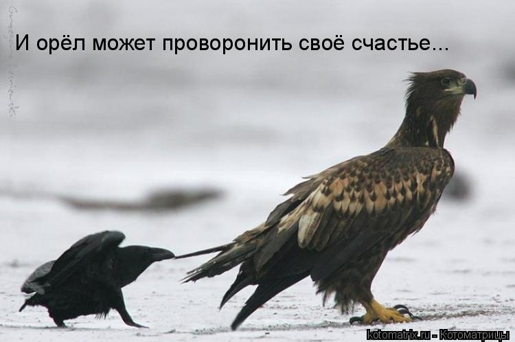 Котоматрица: И орёл может проворонить своё счастье...