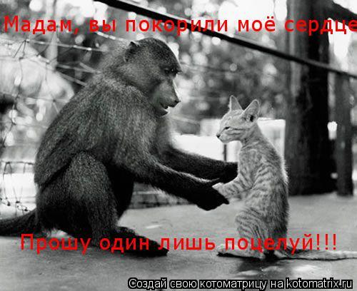 Котоматрица: Мадам, вы покорили моё сердце  Прошу один лишь поцелуй!!!