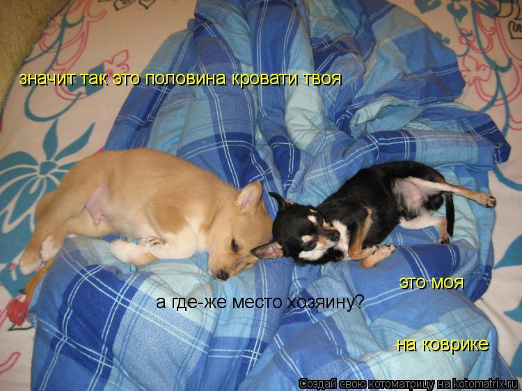 Котоматрица: значит так это половина кровати твоя это моя а где-же место хозяину? на коврике