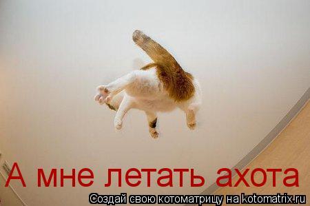 Котоматрица: А мне летать ахота