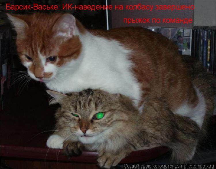 Котоматрица: Барсик-Ваське: ИК-наведение на колбасу завершено прыжок по команде
