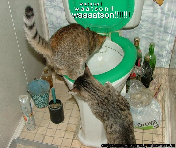 Котоматрица: waaaatson!!!!!!! w a a t s o n !! w a t s o n !