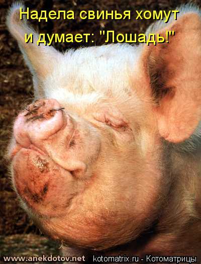 """Котоматрица: Надела свинья хомут  и думает: """"Лошадь!"""""""