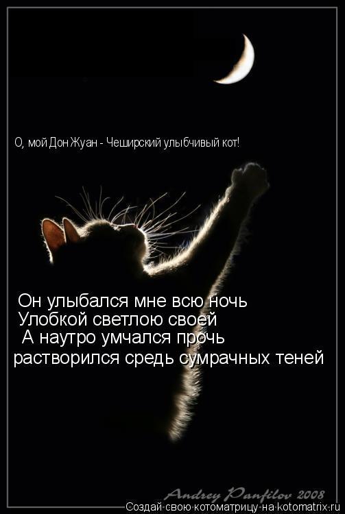 Котоматрица: Он улыбался мне всю ночь Улобкой светлою своей  А наутро умчался прочь растворился средь сумрачных теней О, мой Дон Жуан - Чеширский улыбчив