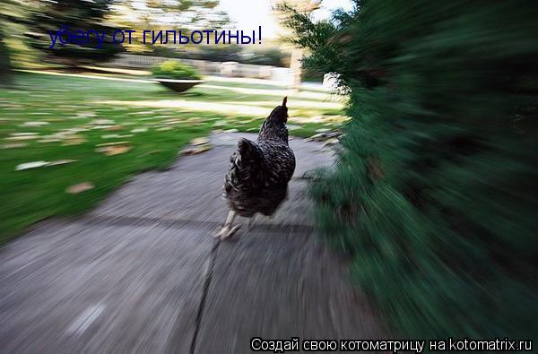Котоматрица: убегу от гильотины!