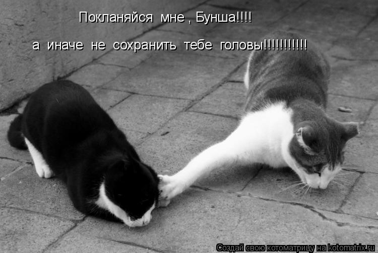 Котоматрица: Покланяйся  мне , Бунша!!!! а  иначе  не  сохранить  тебе  головы!!!!!!!!!!!