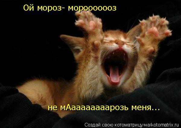 Котоматрица: Ой мороз- морооооооз не мАаааааааарозь меня...