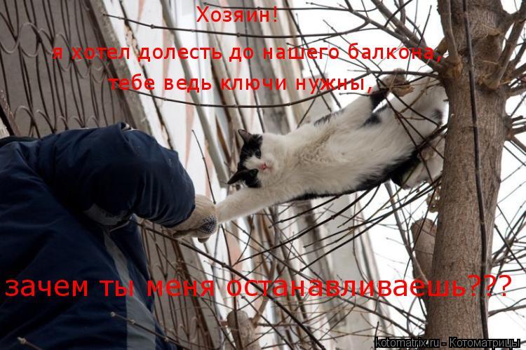 Котоматрица: Хозяин! я хотел долесть до нашего балкона, тебе ведь ключи нужны, зачем ты меня останавливаешь???