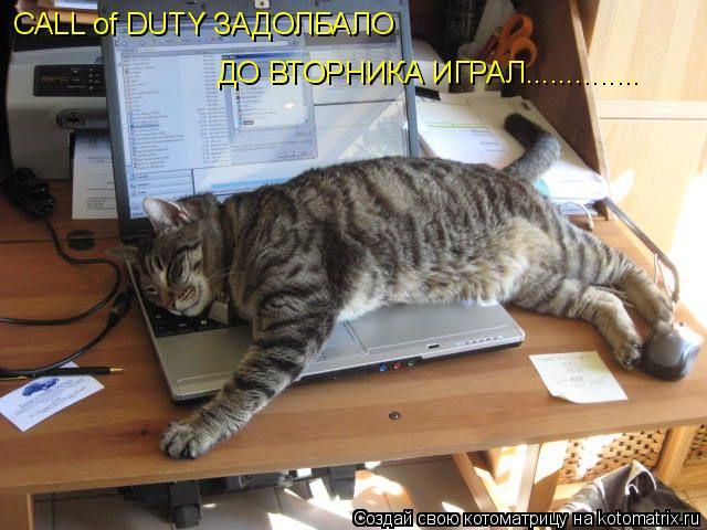 Котоматрица: CALL of DUTY ЗАДОЛБАЛО  ДО ВТОРНИКА ИГРАЛ..............