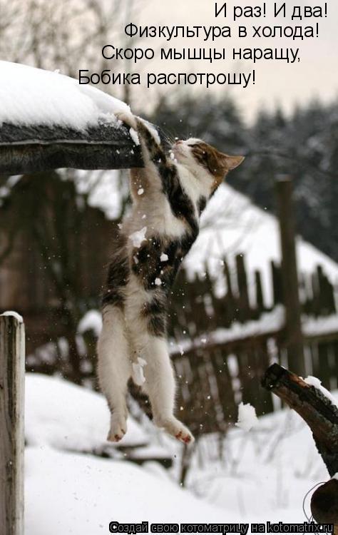Котоматрица: И раз! И два!  Физкультура в холода! Скоро мышцы наращу, Бобика распотрошу!