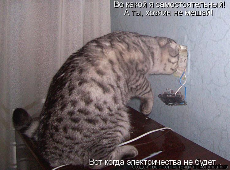 Котоматрица: Во какой я самостоятельный! А ты, хозяин не мешай! Вот когда электричества не будет...