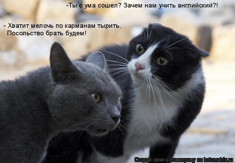 Котоматрица: -Ты с ума сошел? Зачем нам учить английский?! - Хватит мелочь по карманам тырить.  Посольство брать будем!