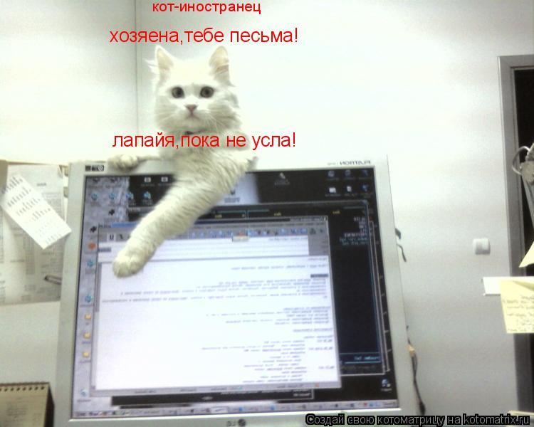 Котоматрица: хозяена,тебе песьма! лапайя,пока не усла! кот-иностранец