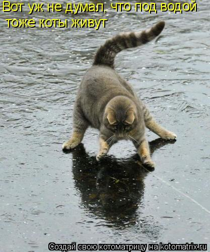 Котоматрица: Вот уж не думал, что под водой тоже коты живут