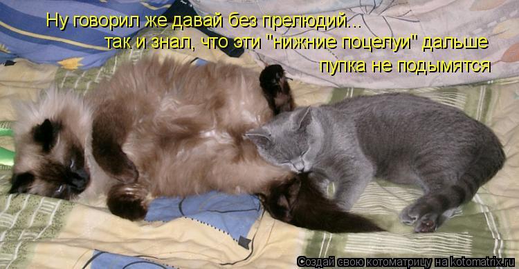 """Котоматрица: Ну говорил же давай без прелюдий... так и знал, что эти """"нижние поцелуи"""" дальше  пупка не подымятся"""